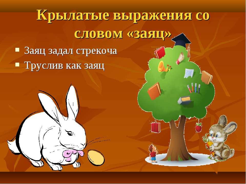 Заяц задал стрекоча Труслив как заяц Крылатые выражения со словом «заяц»