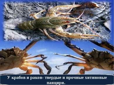 У крабов и раков- твердые и прочные хитиновые панцири.