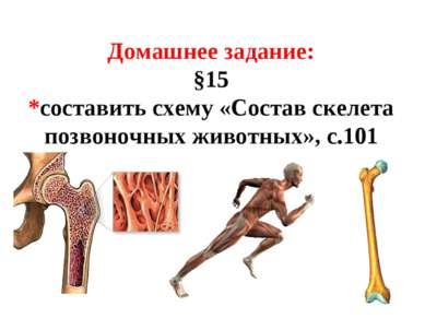 Домашнее задание: §15 *составить схему «Состав скелета позвоночных животных»,...