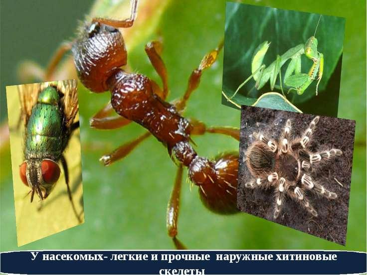У насекомых- легкие и прочные наружные хитиновые скелеты