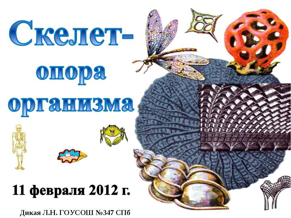 Дикая Л.Н. ГОУСОШ №347 СПб