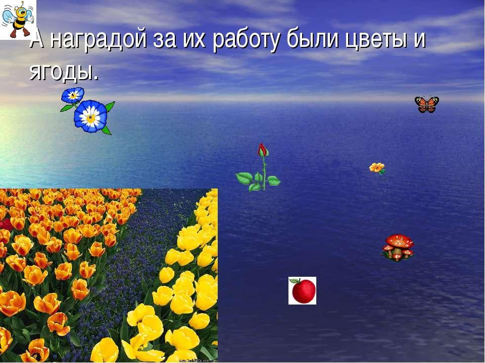 А наградой за их работу были цветы и ягоды.