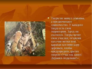 Тигры не живут семьями, а предпочитают одиночество. У каждого тигра есть своя...