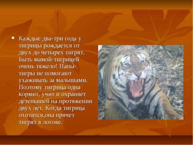Каждые два-три года у тигрицы рождается от двух до четырех тигрят. Быть мамой...