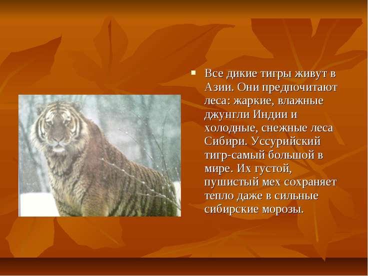 Все дикие тигры живут в Азии. Они предпочитают леса: жаркие, влажные джунгли ...