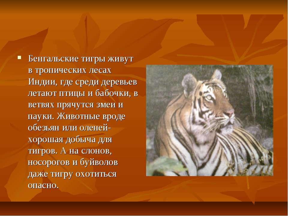 Бенгальские тигры живут в тропических лесах Индии, где среди деревьев летают ...