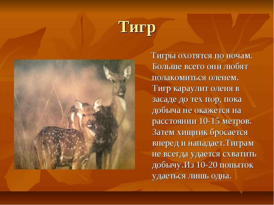 Тигр Тигры охотятся по ночам. Больше всего они любят полакомиться оленем. Тиг...