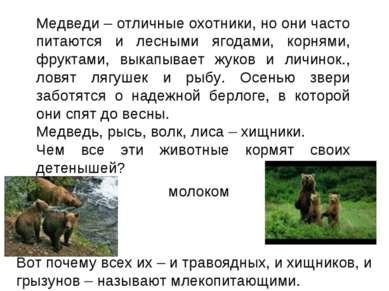 Медведи – отличные охотники, но они часто питаются и лесными ягодами, корнями...