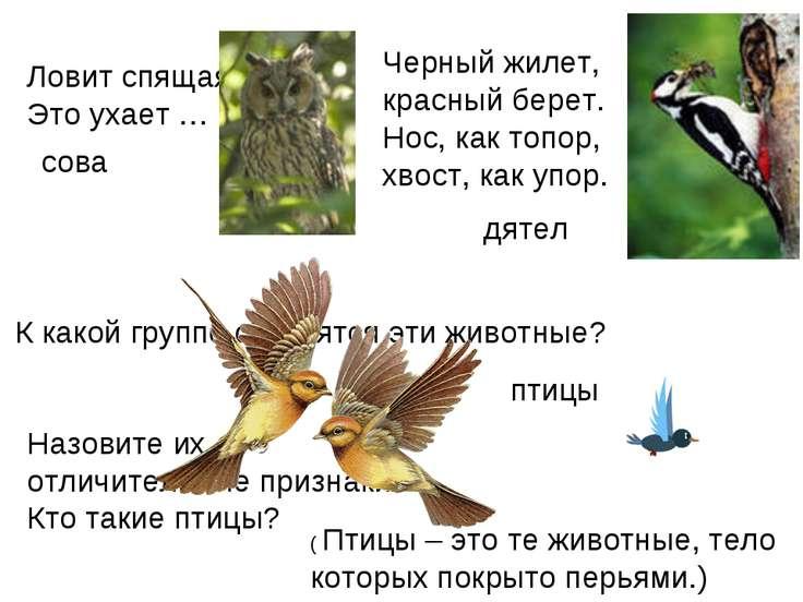 Ловит спящая трава, Это ухает … сова Черный жилет, красный берет. Нос, как т...