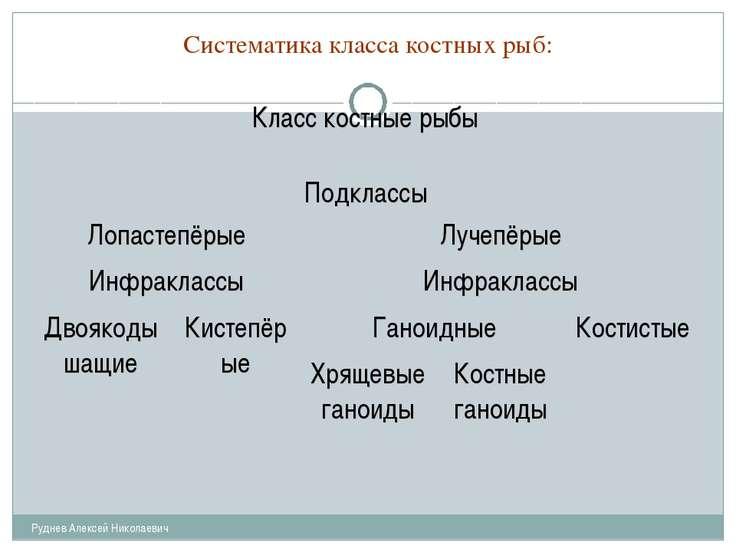 Систематика класса костных рыб: Руднев Алексей Николаевич Класс костные рыбы ...