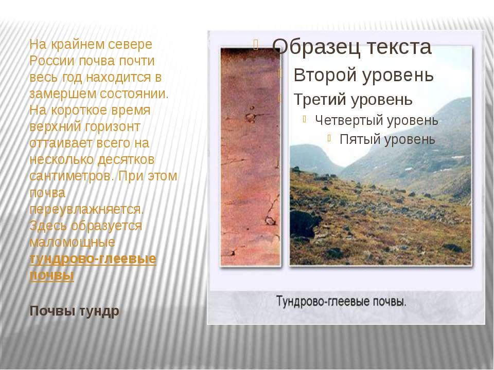 Почвы тундр На крайнем севере России почва почти весь год находится в замерше...