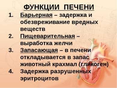 ФУНКЦИИ ПЕЧЕНИ Барьерная – задержка и обезвреживание вредных веществ Пищевари...