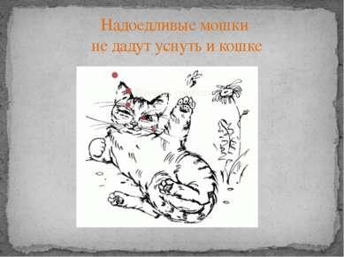 Надоедливые мошки не дадут уснуть и кошке