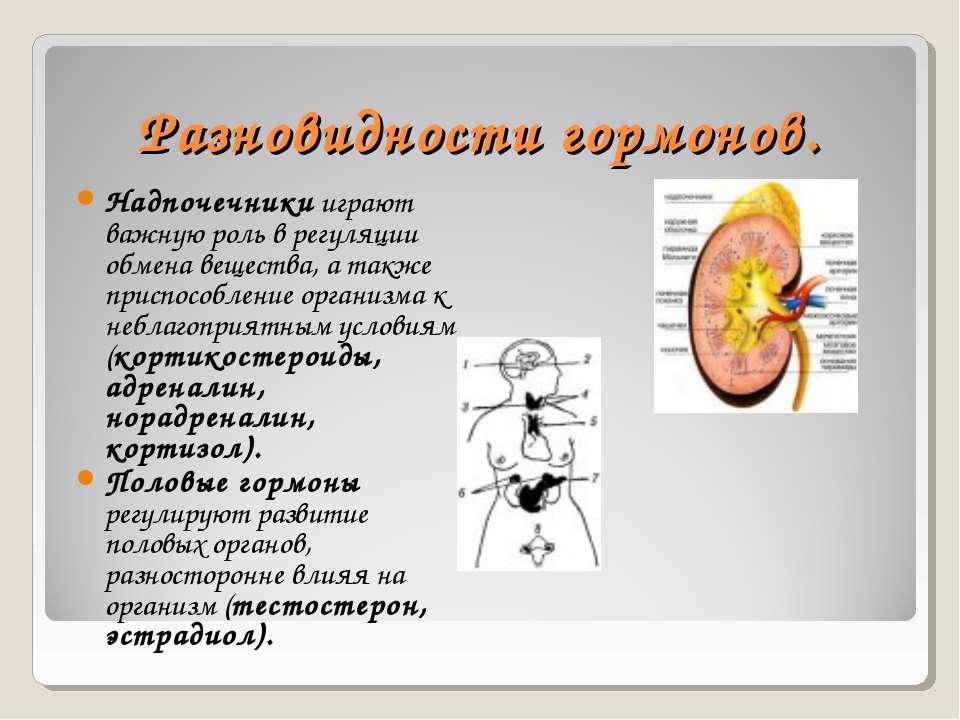 Разновидности гормонов. Надпочечники играют важную роль в регуляции обмена ве...