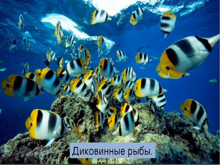 Диковинные рыбы.