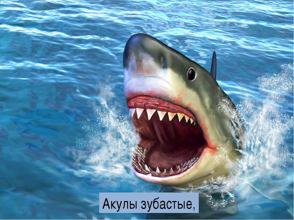Акулы зубастые,