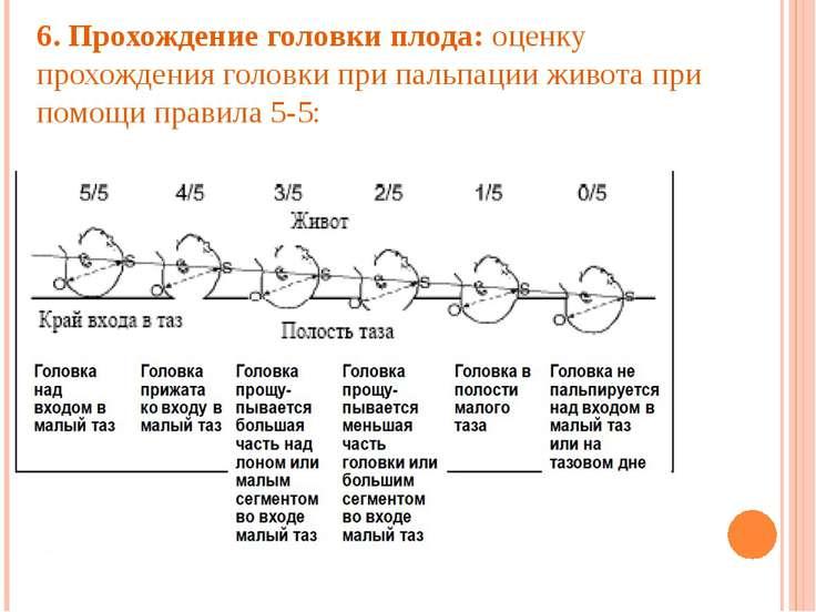 6. Прохождение головки плода: оценку прохождения головки при пальпации живота...