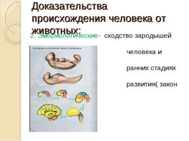 Доказательства происхождения человека от животных: 2. Эмбриологические- сходс...