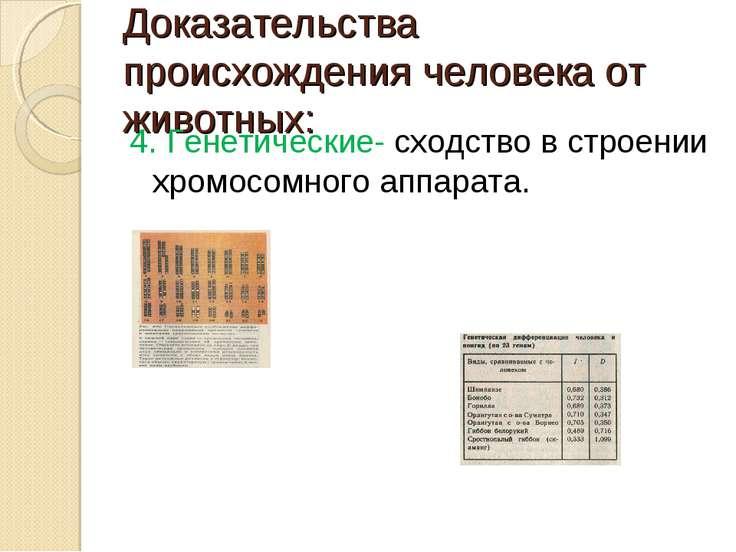 Доказательства происхождения человека от животных: 4. Генетические- сходство ...