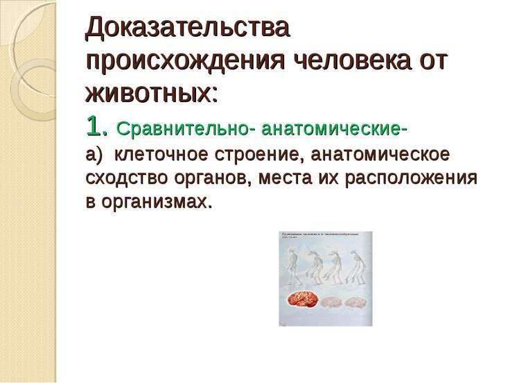 Доказательства происхождения человека от животных: 1. Сравнительно- анатомиче...