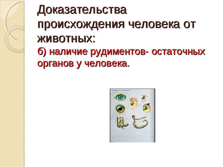 Доказательства происхождения человека от животных: б) наличие рудиментов- ост...