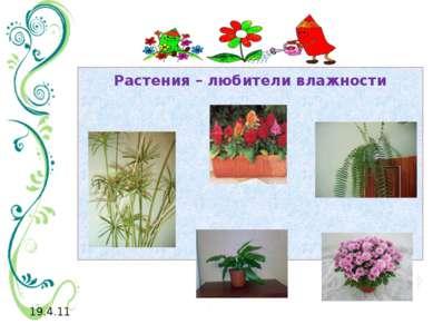 Растения – любители влажности