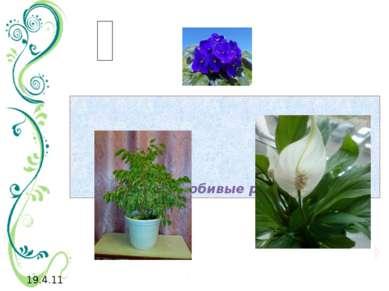 теплолюбивые растения