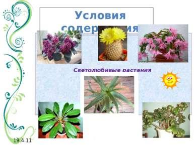 Светолюбивые растения Условия содержания