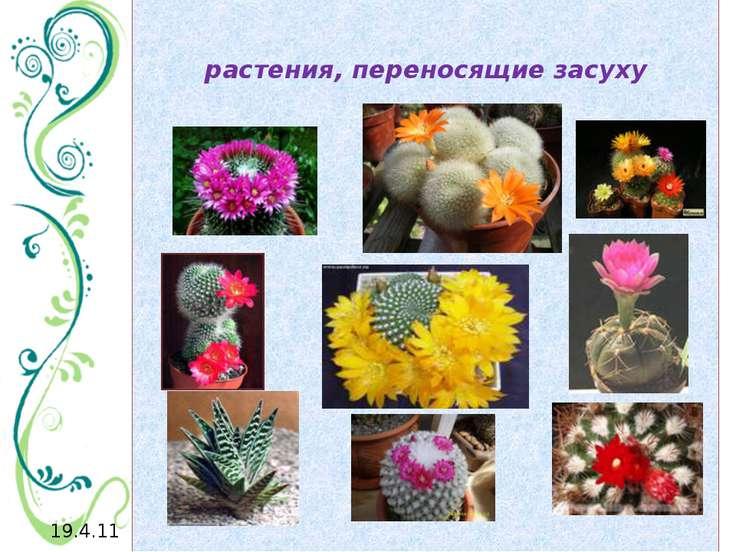 растения, переносящие засуху