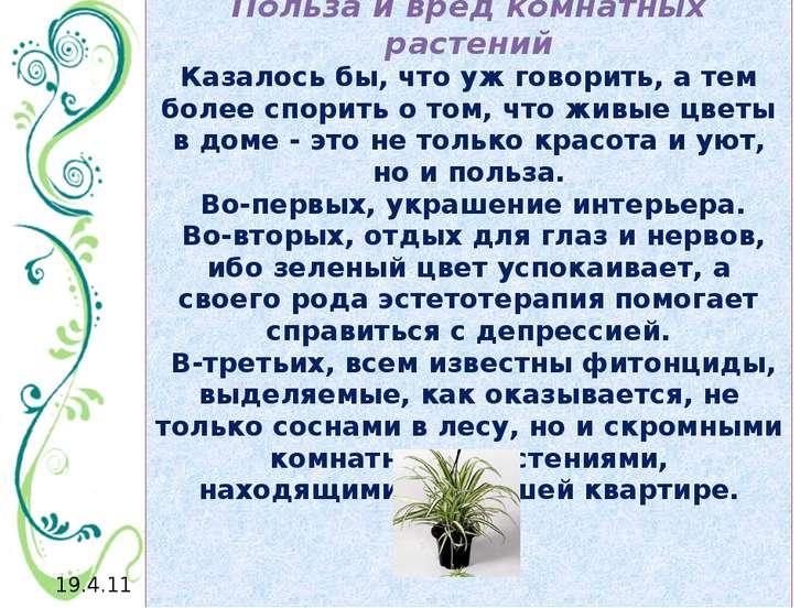 Польза и вред комнатных растений Казалось бы, что уж говорить, а тем более сп...