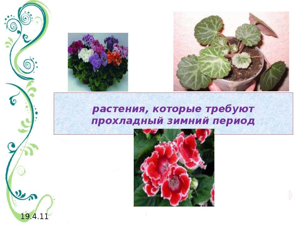 растения, которые требуют прохладный зимний период