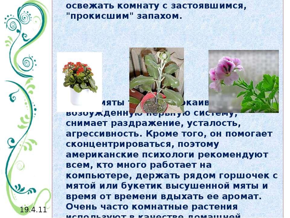 Герань, например, имеет свойство как бы всасывать сырость и угар, очищать и о...