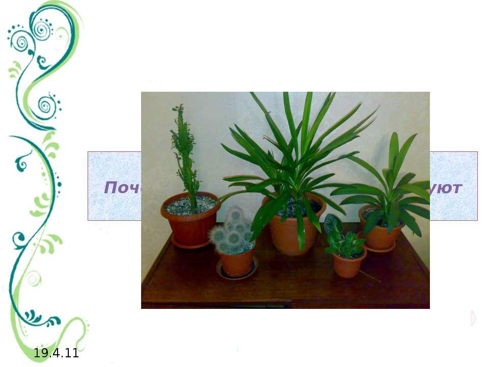 Почему комнатные растения требуют особых условий содержания?