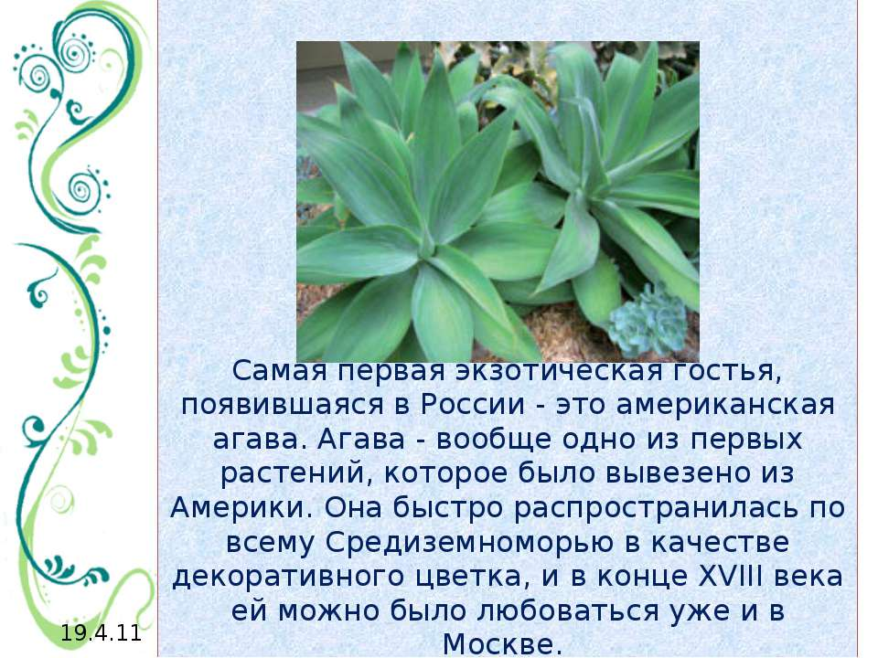 Самая первая экзотическая гостья, появившаяся в России - это американская ага...