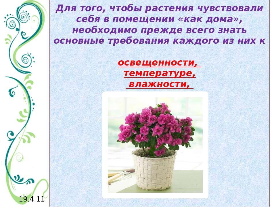 Для того, чтобы растения чувствовали себя в помещении «как дома», необходимо ...