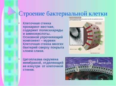 Строение бактериальной клетки Клеточная стенка прокариот жесткая, содержит по...