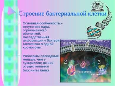 Строение бактериальной клетки Основная особенность – отсутствие ядра, огранич...