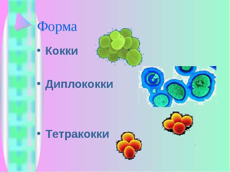 Форма Кокки Диплококки Тетракокки