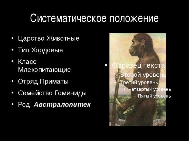 Систематическое положение Царство Животные Тип Хордовые Класс Млекопитающие О...