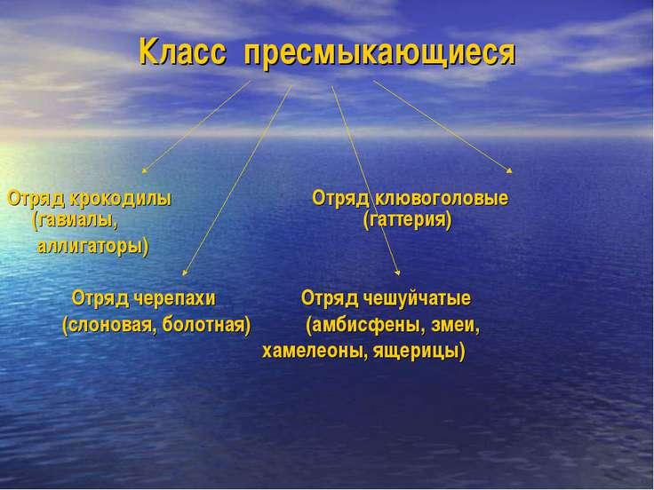 Класс пресмыкающиеся Отряд крокодилы Отряд клювоголовые (гавиалы, (гаттерия) ...