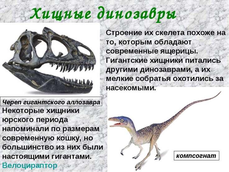 Строение их скелета похоже на то, которым обладают современные ящерицы. Гиган...