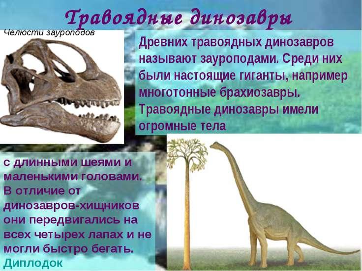 Древних травоядных динозавров называют зауроподами. Среди них были настоящие ...