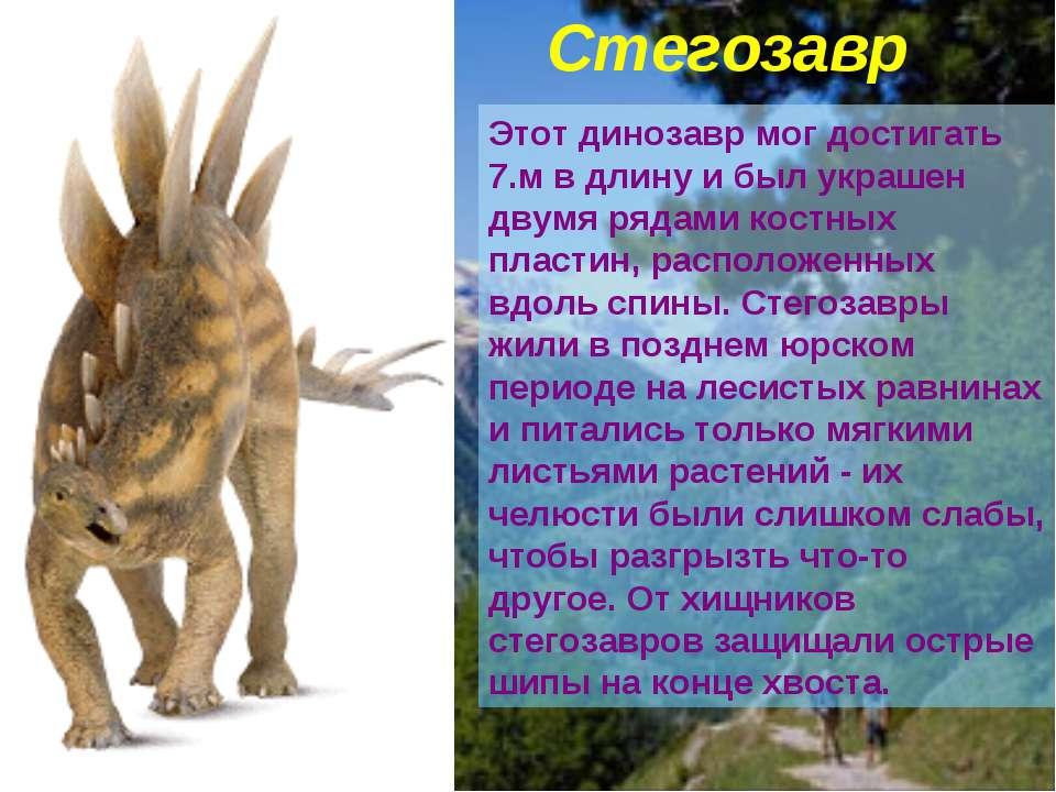 Этот динозавр мог достигать 7.м в длину и был украшен двумя рядами костных пл...