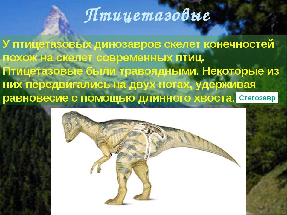 У птицетазовых динозавров скелет конечностей похож на скелет современных птиц...