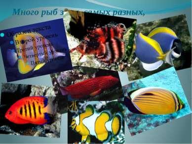 Много рыб здесь самых разных,