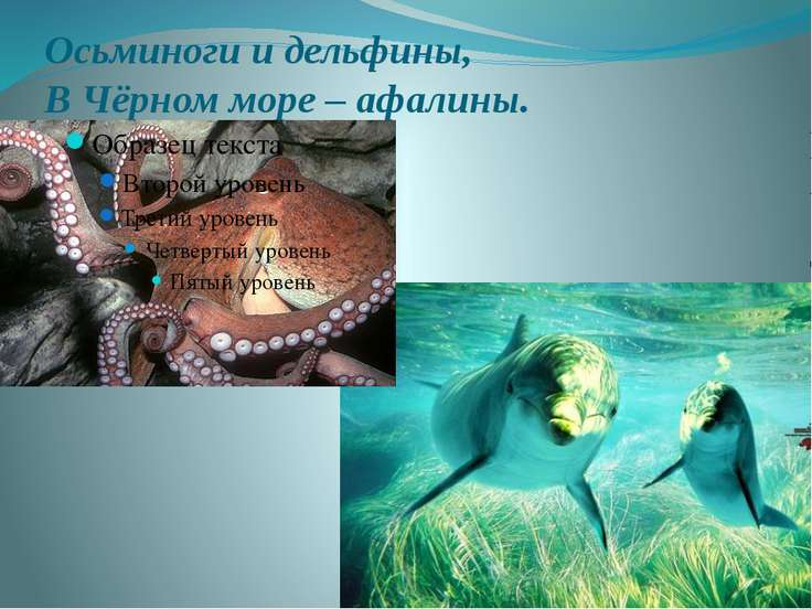 Осьминоги и дельфины, В Чёрном море – афалины.