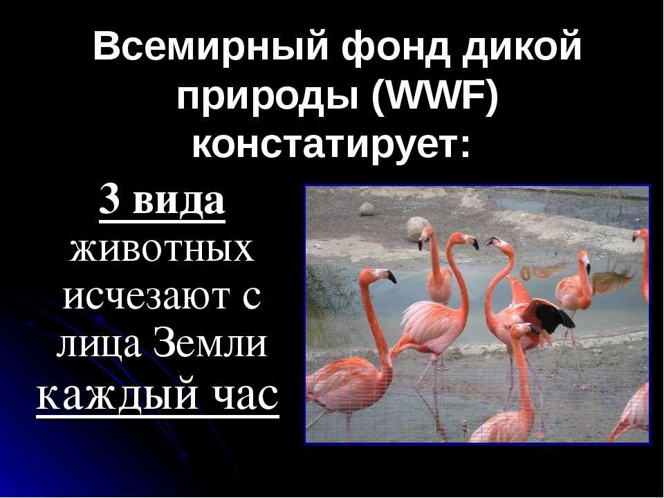 Всемирный фонд дикой природы (WWF) констатирует: 3 вида животных исчезают с л...