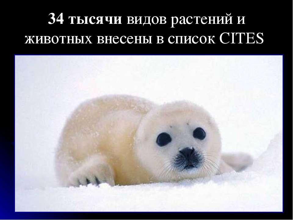 34 тысячи видов растений и животных внесены в список CITES