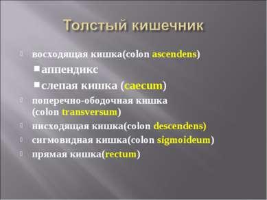восходящая кишка(colon ascendens) аппендикс слепая кишка (caecum) поперечно-о...