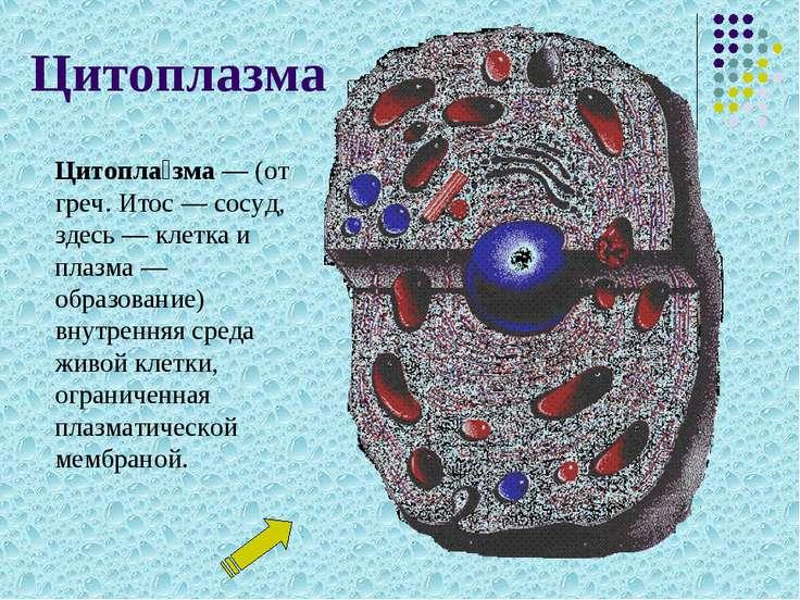 Цитоплазма Цитопла зма— (от греч. Итос— сосуд, здесь— клетка и плазма— об...